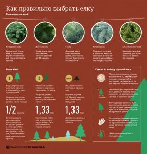 Инфографика от РИА Новости. Выбор Ели