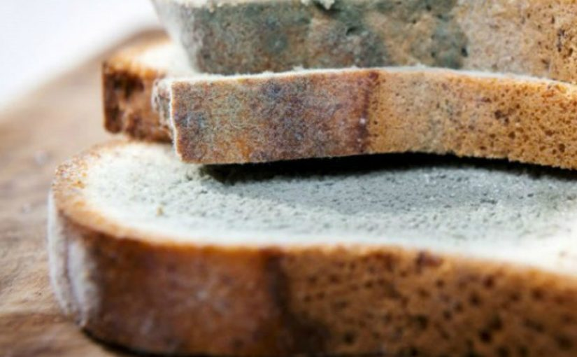 В Кузбассе осудили пару, заставлявшую двоих людей работать за буханку хлеба