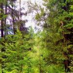 Кузбасские спасатели рекомендуют соблюдать  правила  безопасности, отправляясь в лес