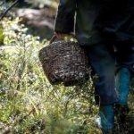 В сезон сбора дикоросов кузбасские спасатели рекомендуют соблюдать правила безопасности в лесу