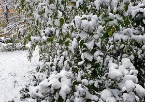 Народная новость: Первый снег (фото)